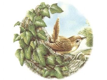 陶瓷印花圖案-樹上鳥 4 (2件)
