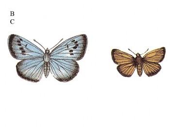 陶瓷印花圖案- 蝴蝶飛舞 2 (小) 6件