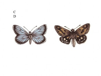 陶瓷印花圖案- 蝴蝶飛舞 1 (小) 6件