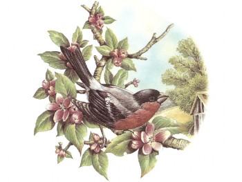 陶瓷印花圖案-樹上鳥 3 (2件)